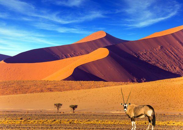 dịch vụ xin visa namibia giá rẻ tại hcm